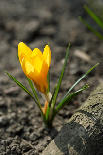 yellowflowerfromthedust2528dt20875082529