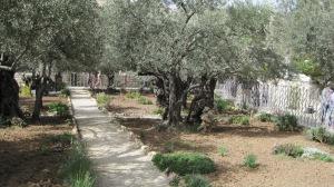 Garden of Gethsemane, Jerusalem, 2010