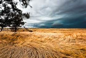 Wheat and Winds